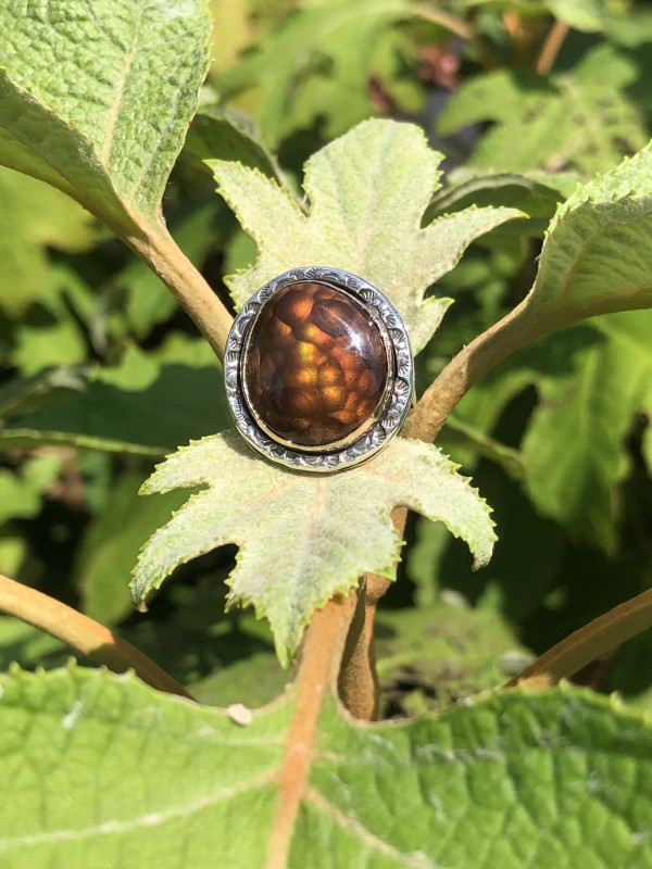 BC Ring Fire Agate in sterling and 14 carat yellow gold, size 6