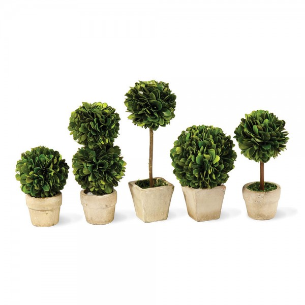 Boxwood Mini Topiaries in Pots