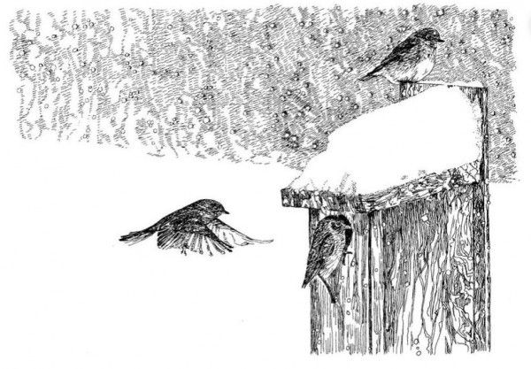 Note Card - Bluebirds