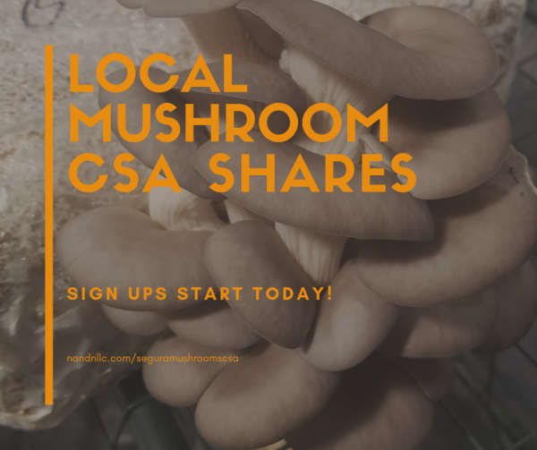 S&S Weekly Mushroom Share - CSA
