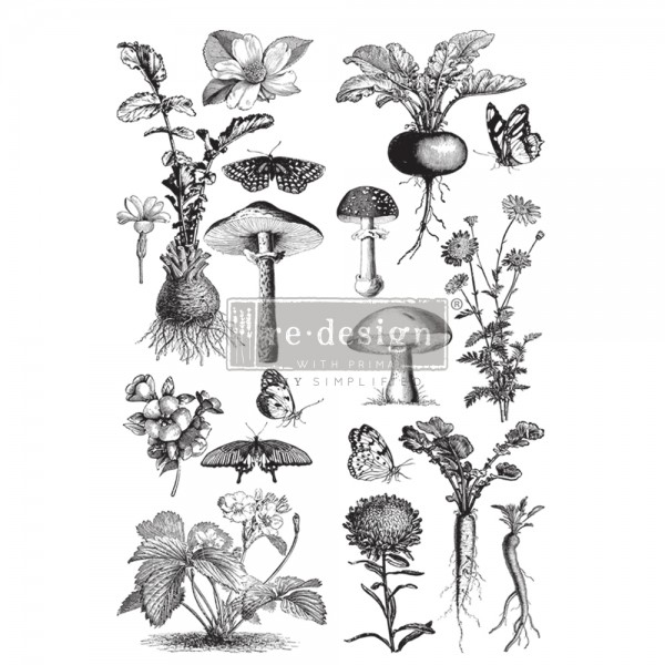 Fungi Forest Transfer